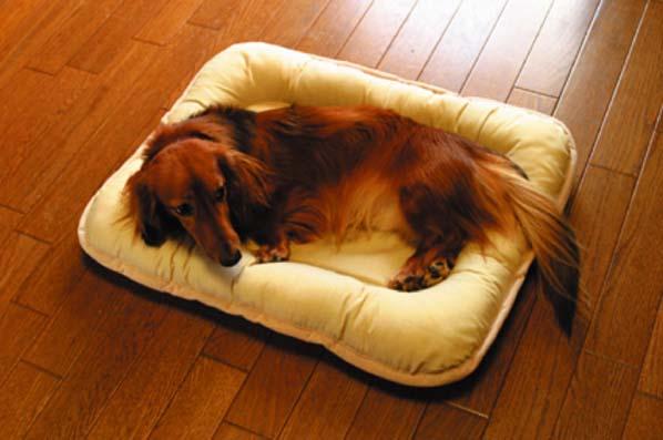 犬ペット用パッド