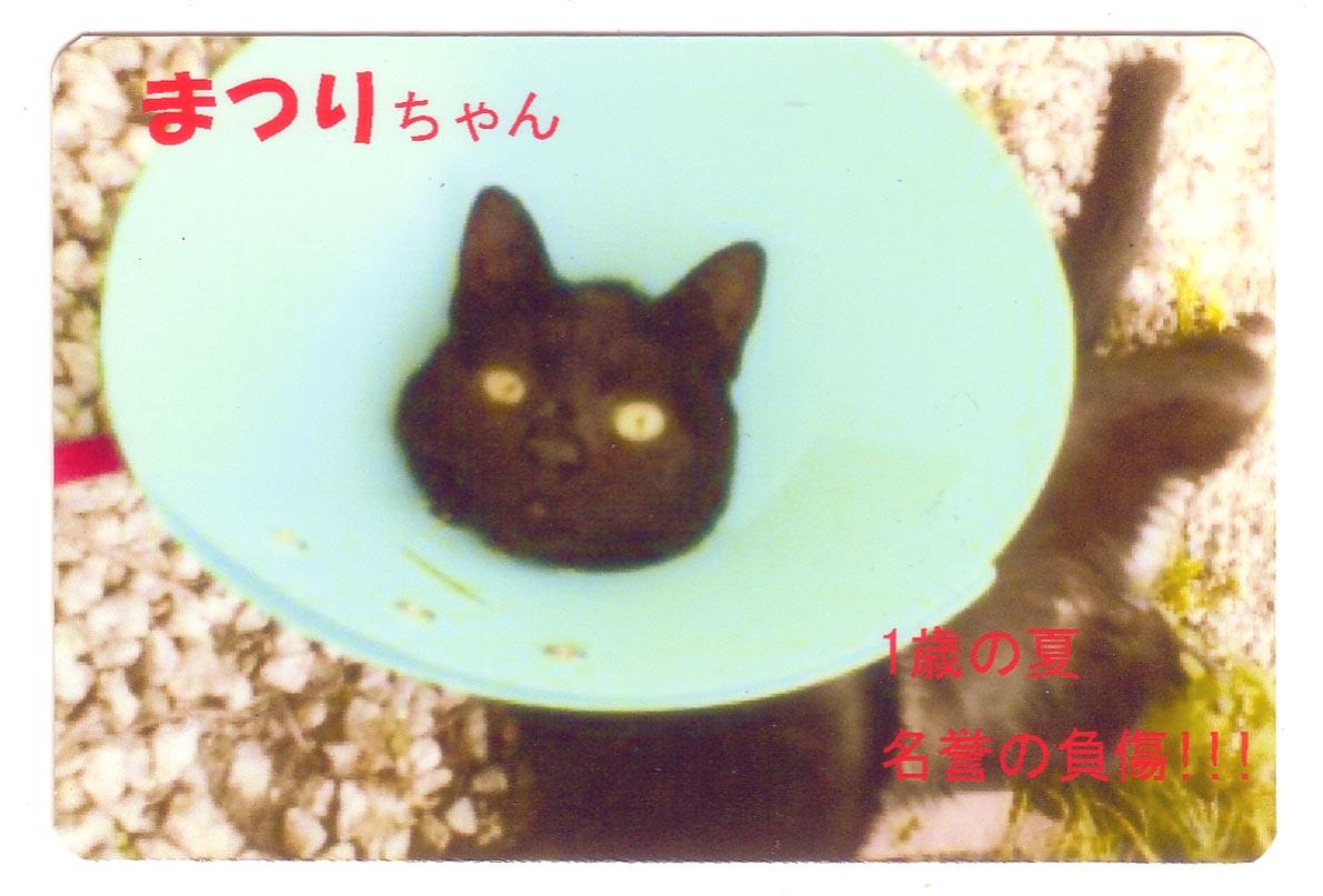 スキミング防止カード(オリジナル別注 猫)